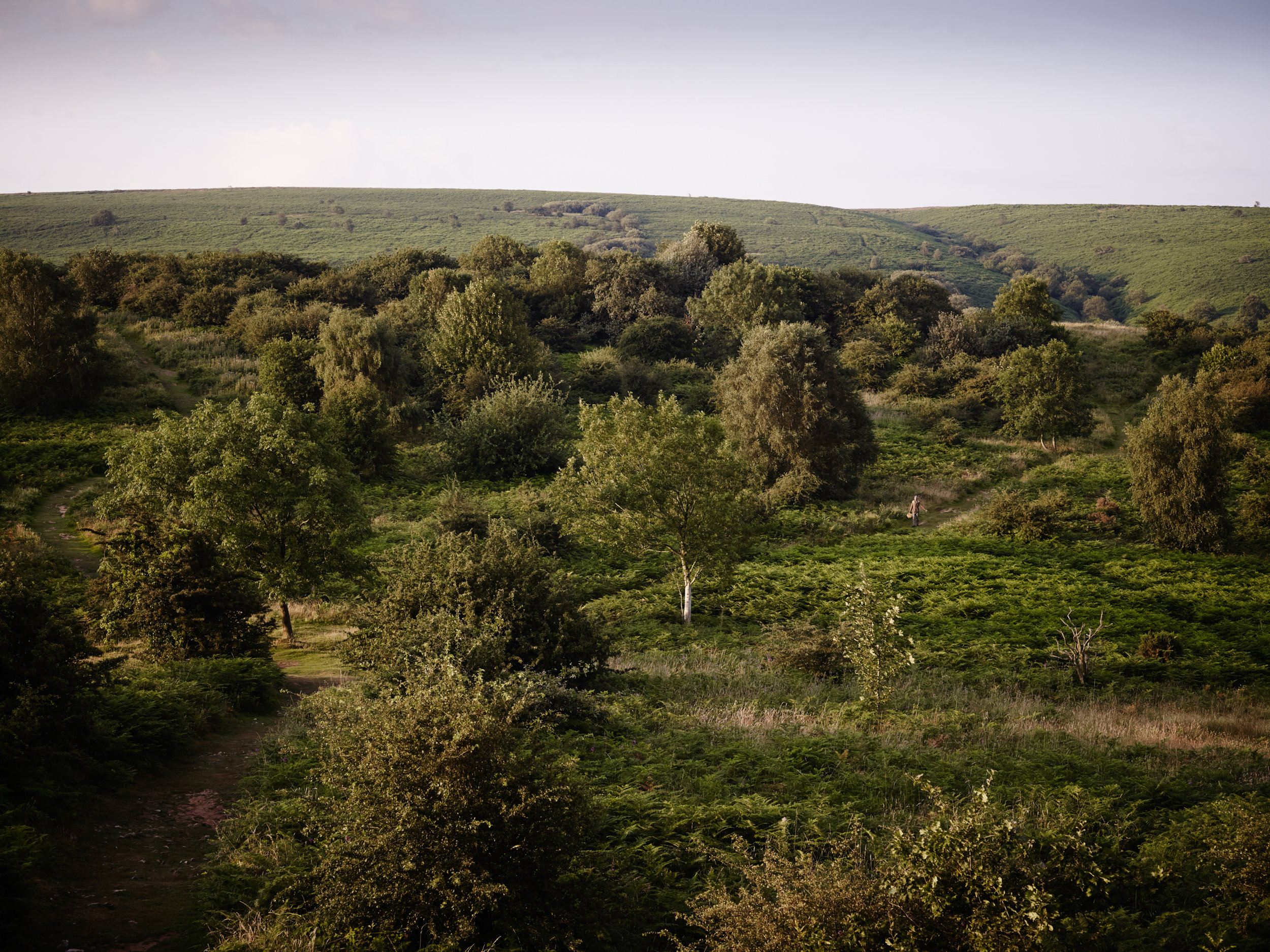 Foraging Landscape Credit Jason Ingram.jpg