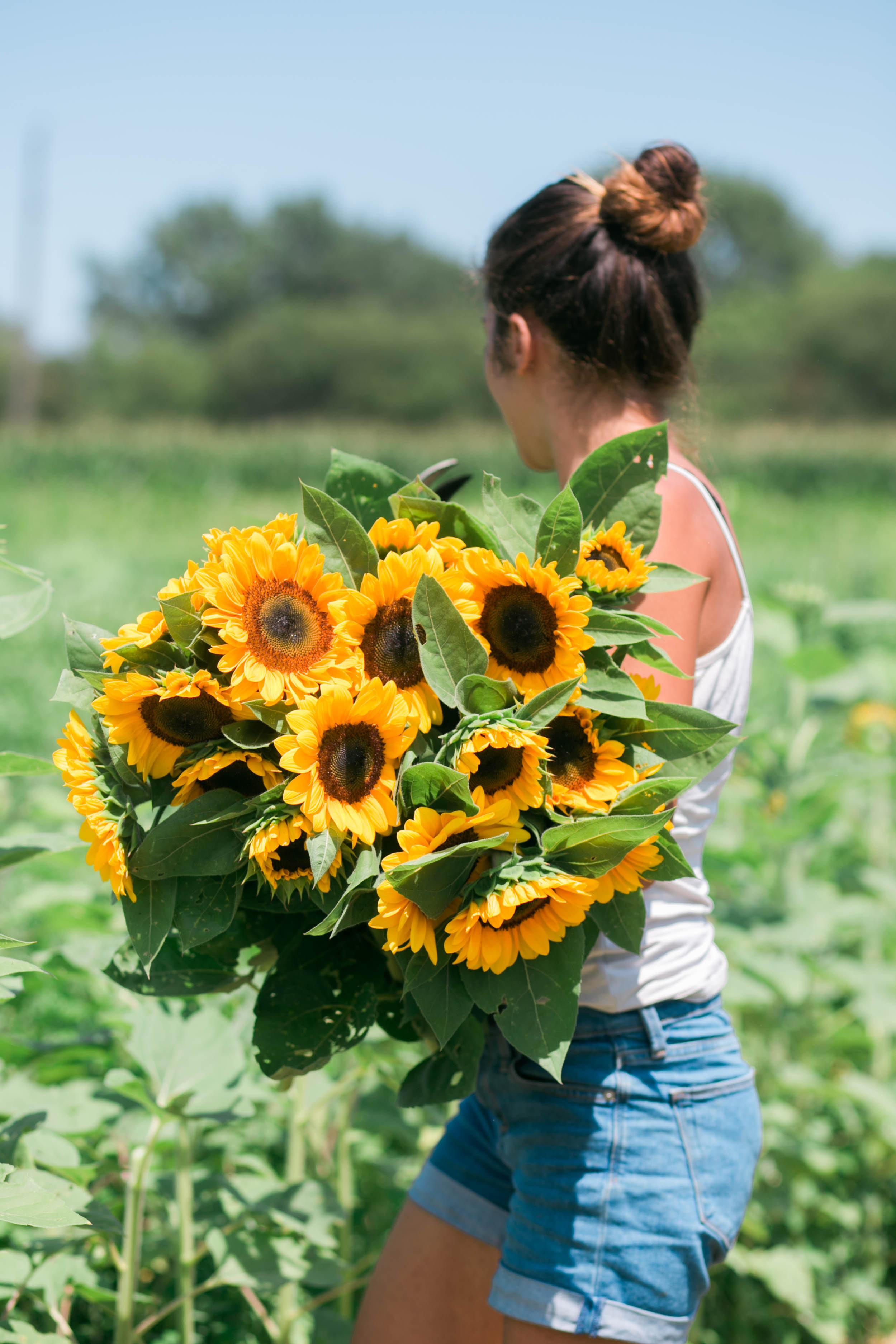 SunflowerPortait