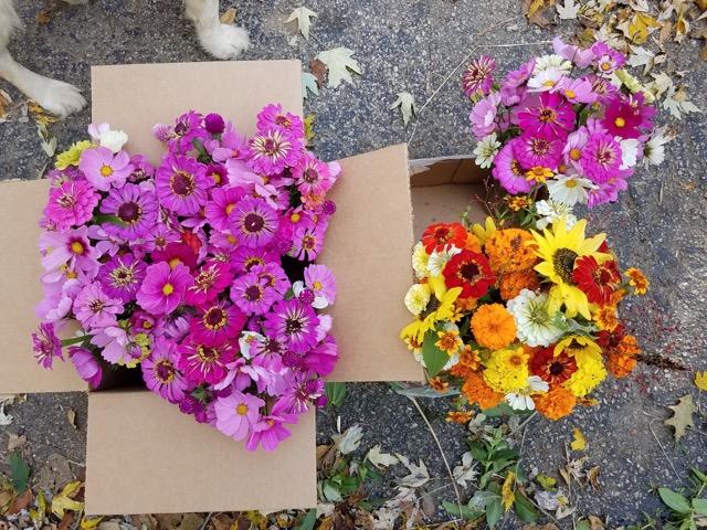 kiraflowers.jpeg