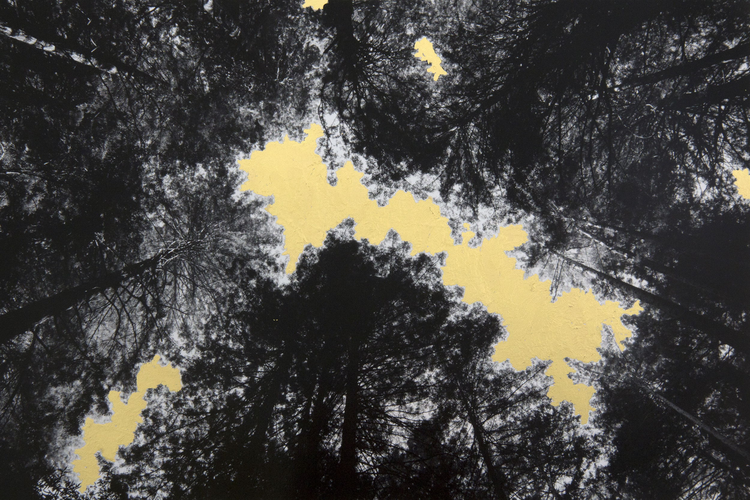 Canopy, 2014, digital pigment print with 22K gold leaf