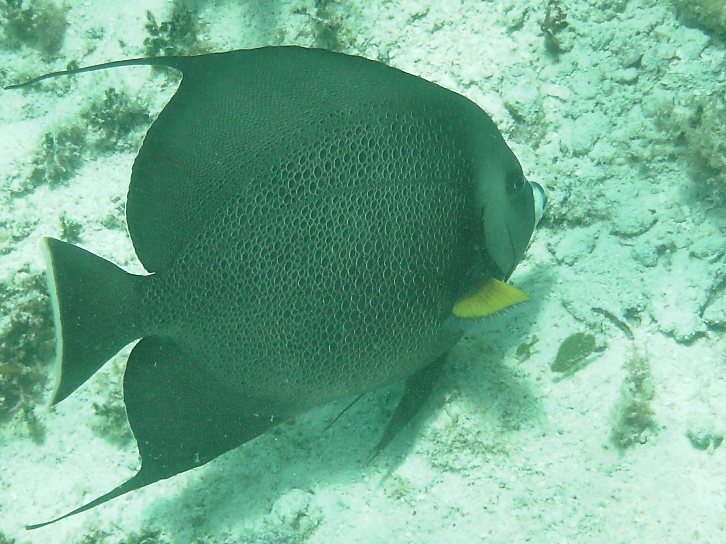 fish snorkel