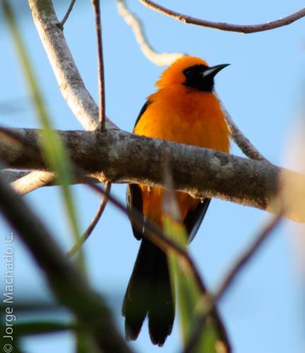 bird watching sian ka'an biosphere
