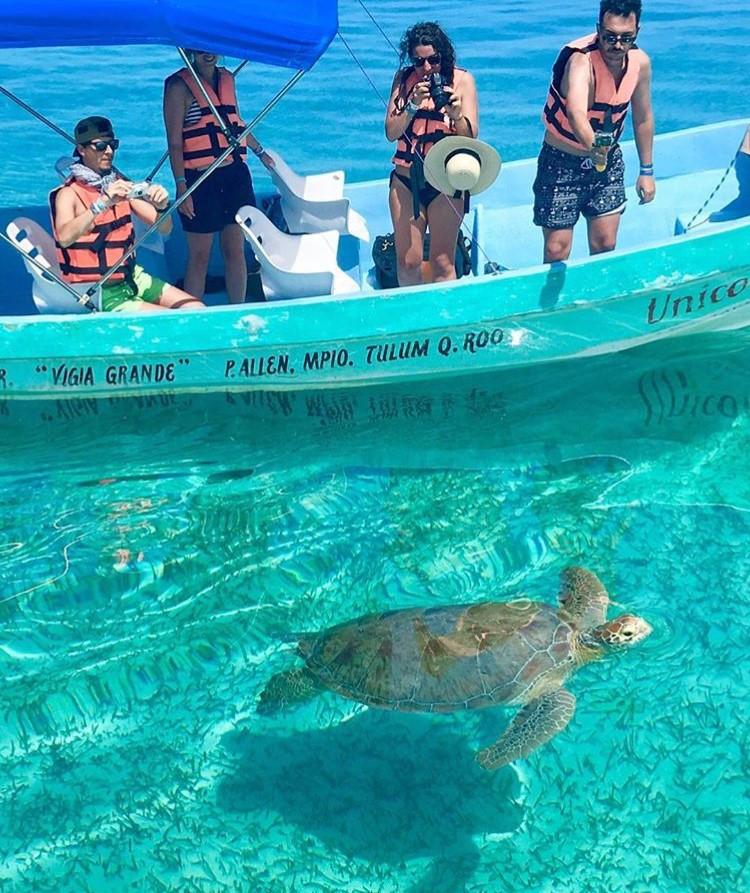 Green Sea Turtle Sian Ka'an Biosphere