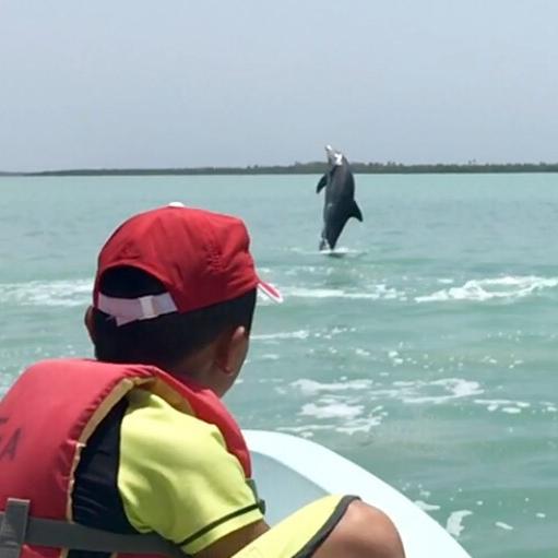 Bottelnose Dolphin Tour