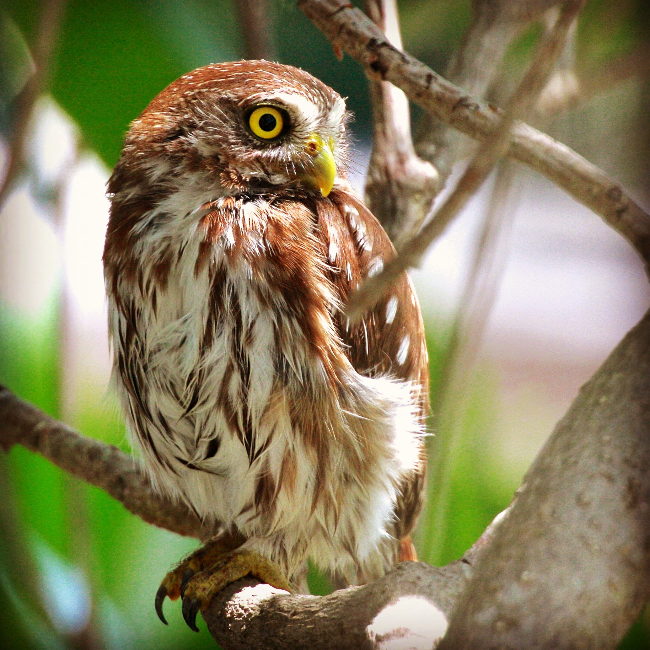 Bird Watching Tours Tulum