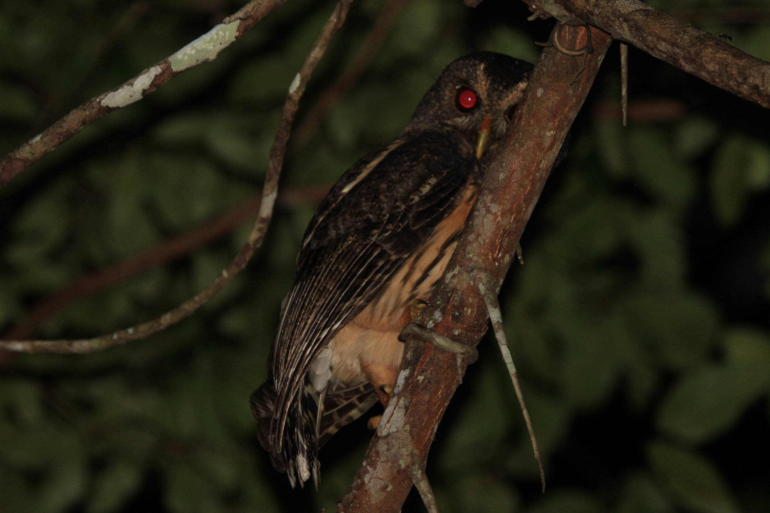 Night Bird Watching Tours