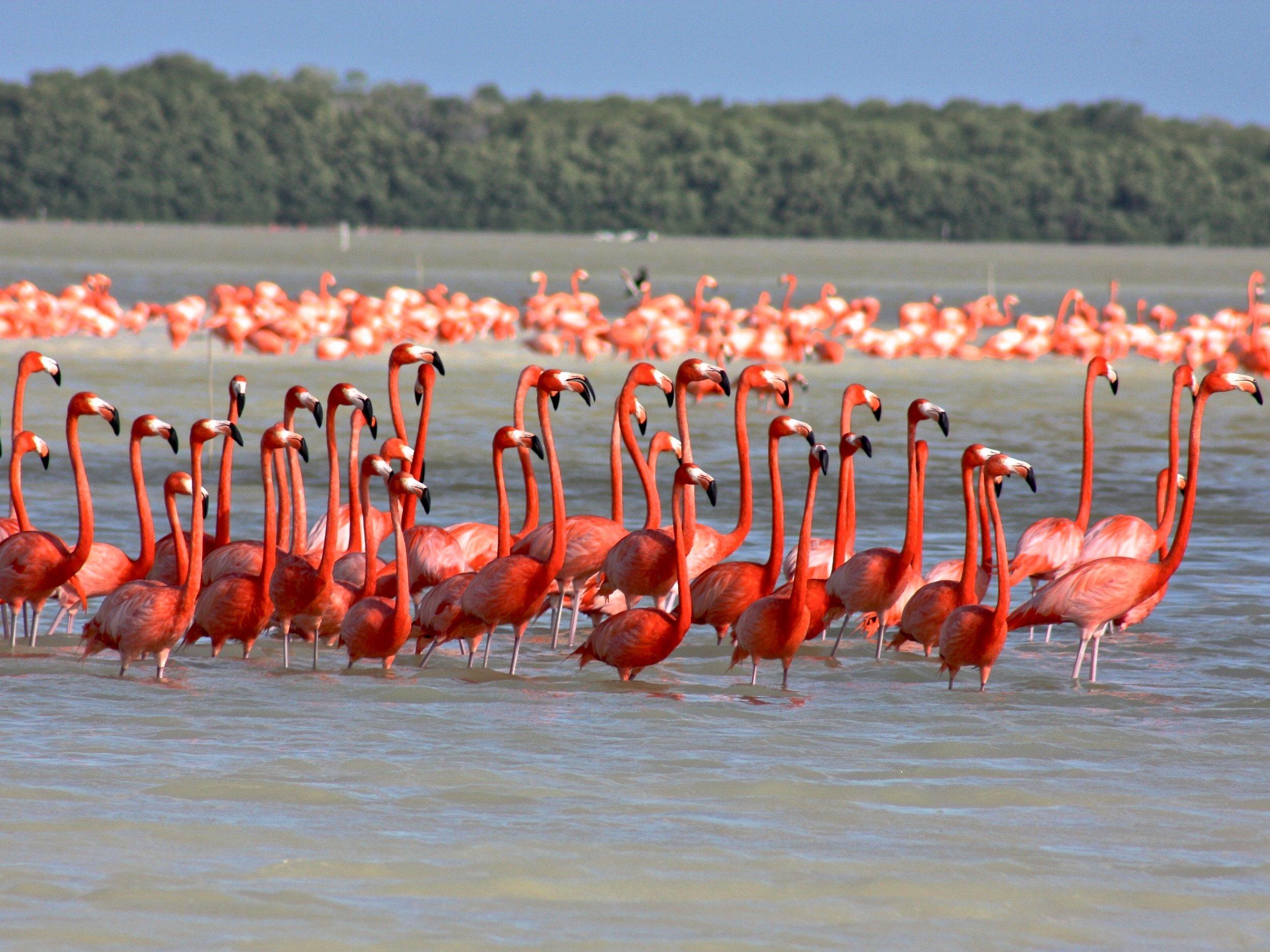 Celestun Biosphere Reserve Yucatan Mexico