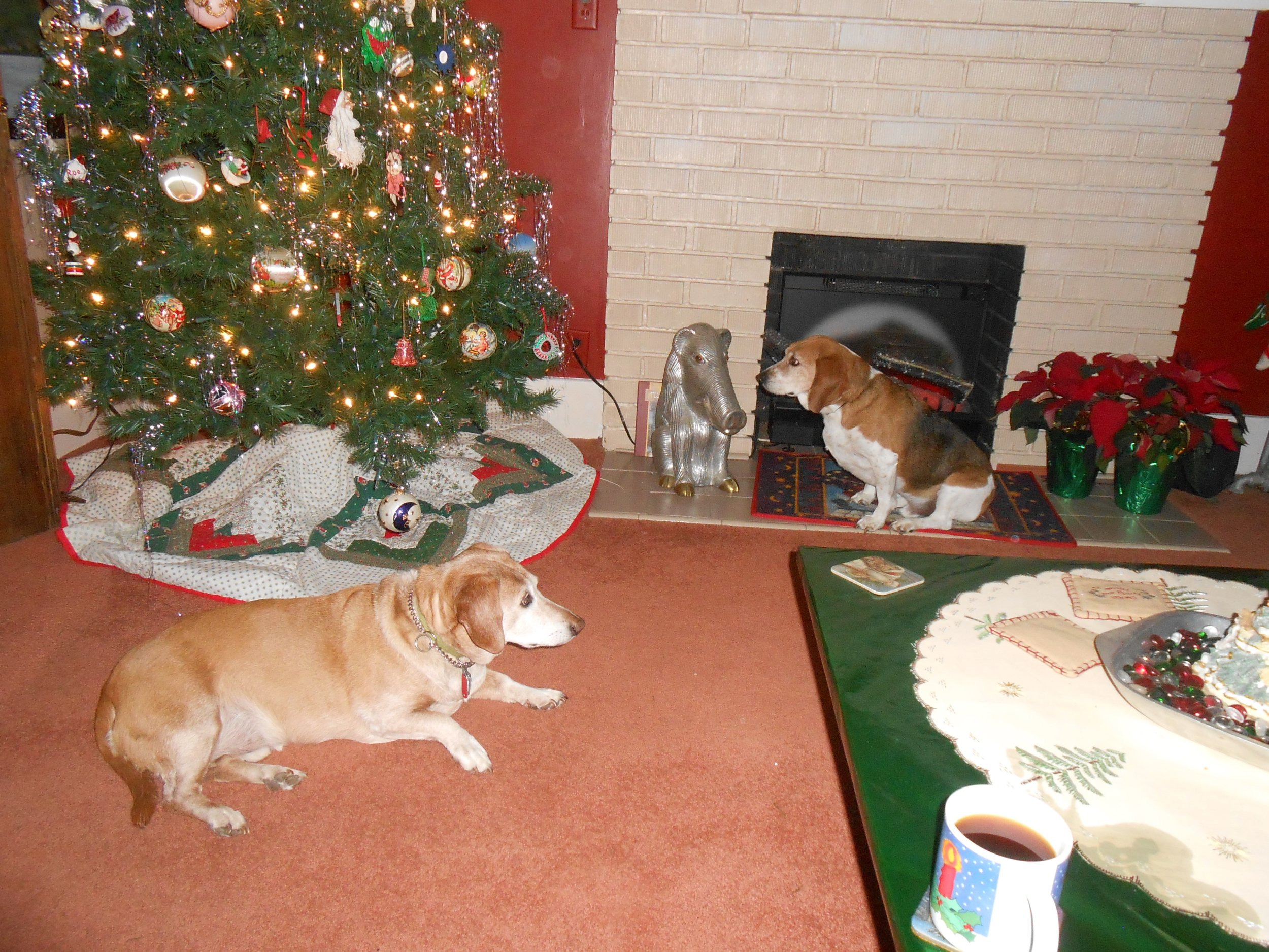 These are Samwise (RIP) and Chester (RIP). Christmas is not the same without them.