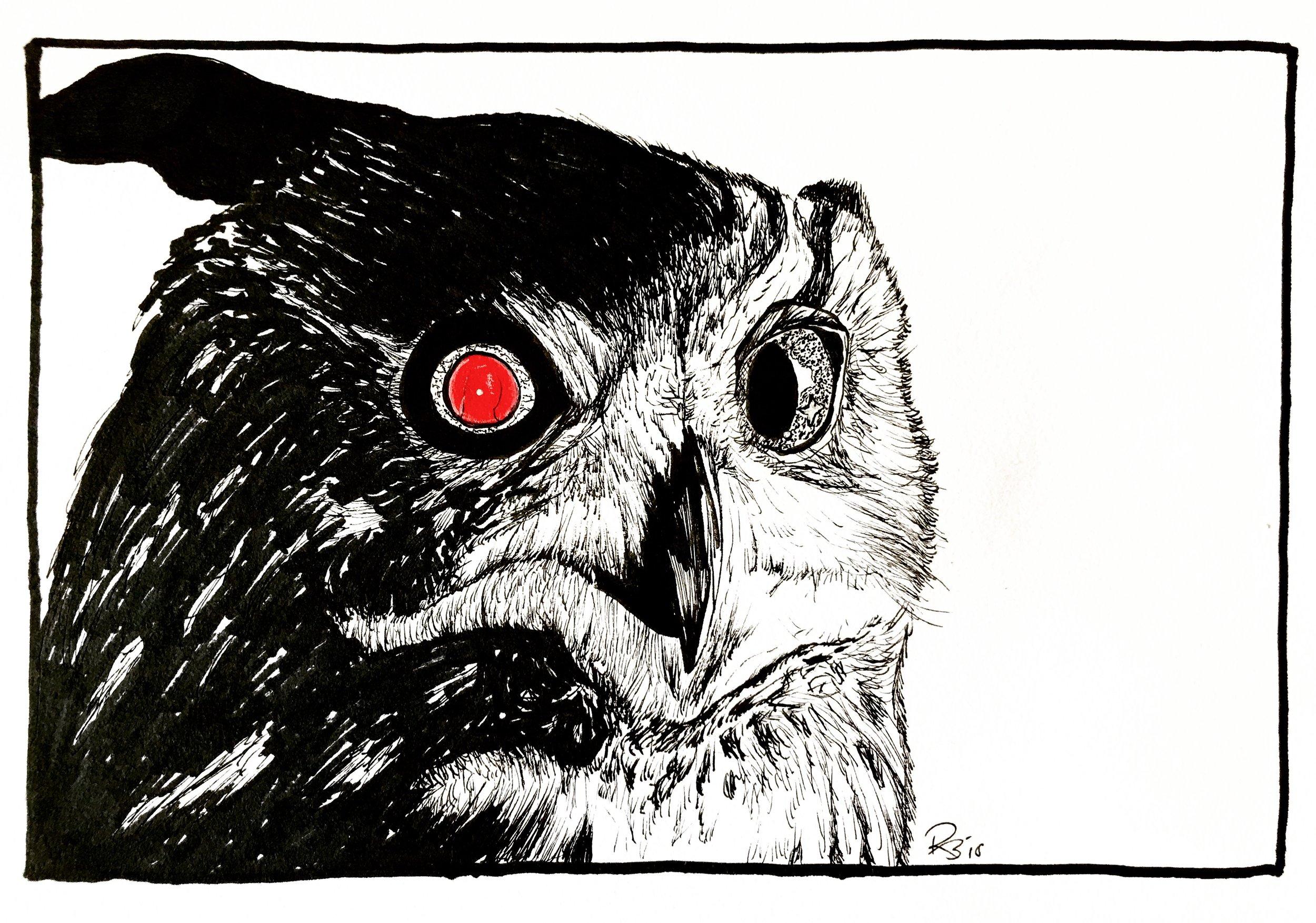 Tyrell's Owl
