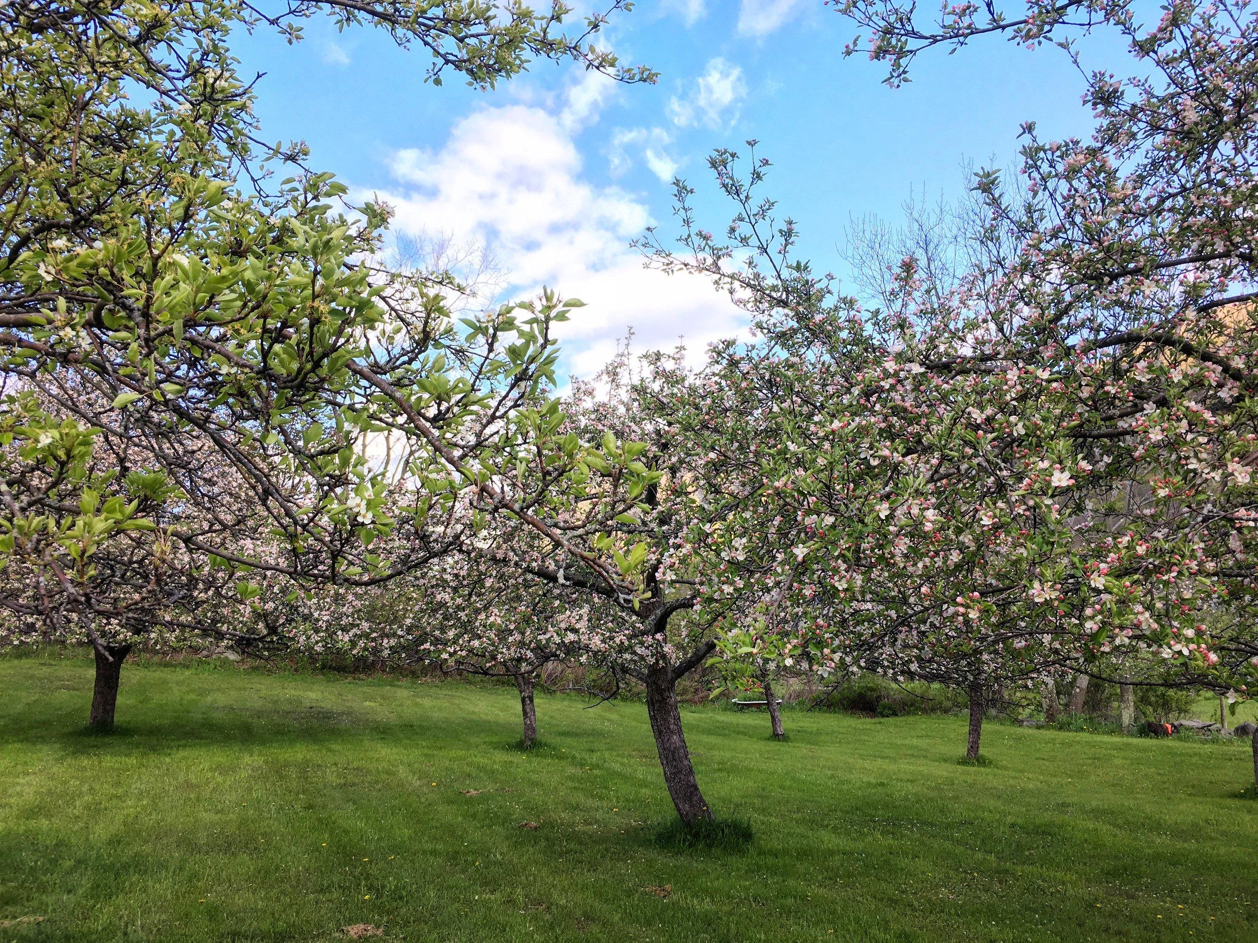 springtrees.jpeg