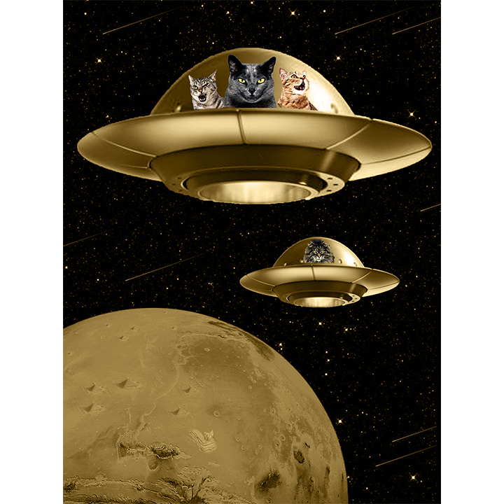 51/100: Cats are aliens.