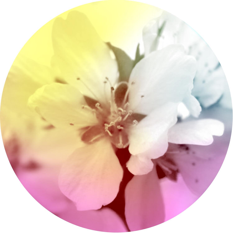 Equinox-CalendarImage-1.png