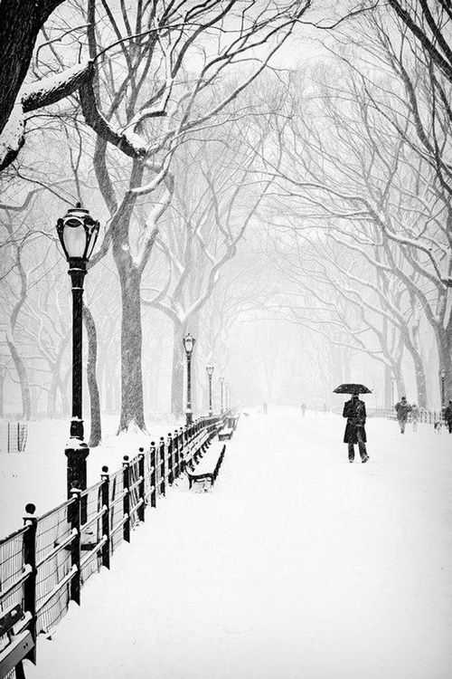 New York's Central Park in the snow.