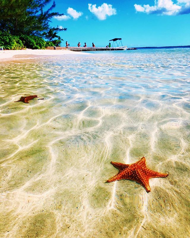 There's a lot to love about Grand Cayman: white sand beaches, ocean-to-table restaurants and spas galore. ☀️ But little pockets of magic transform this island from your convention Caribbean getaway into a downright wondrous destination that surprises and delights. 🌞 Just a 5 minute walk through the woods leads you a completely undeveloped beach with sparkly water filled with plump orange starfish. ⭐️ I didn't see any, but I'm convinced there were a few mermaids swimming around Starfish Point, as well. 🧜♀️ . . . . . . . . . . . . . . . . . . #grandcayman #caymanislands #tropical #starfish #starfishpoint #visitcaymanislands #visitgrandcayman #caribbean #travel #justgo #exploretheworld #my9to5 #nomore9to5 #travelwriter #freelancewriter #wellnesstravel #wellness #naturetherapy #wanderlusting #travelgirlsgo #girlslovetravel #travelmagic #beautifuldestinations #beachlife