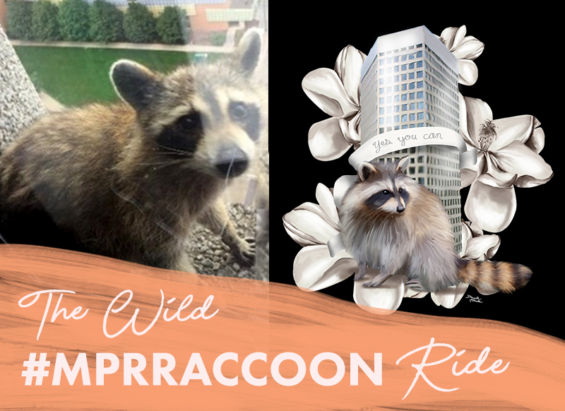 MPRraccoon.jpg