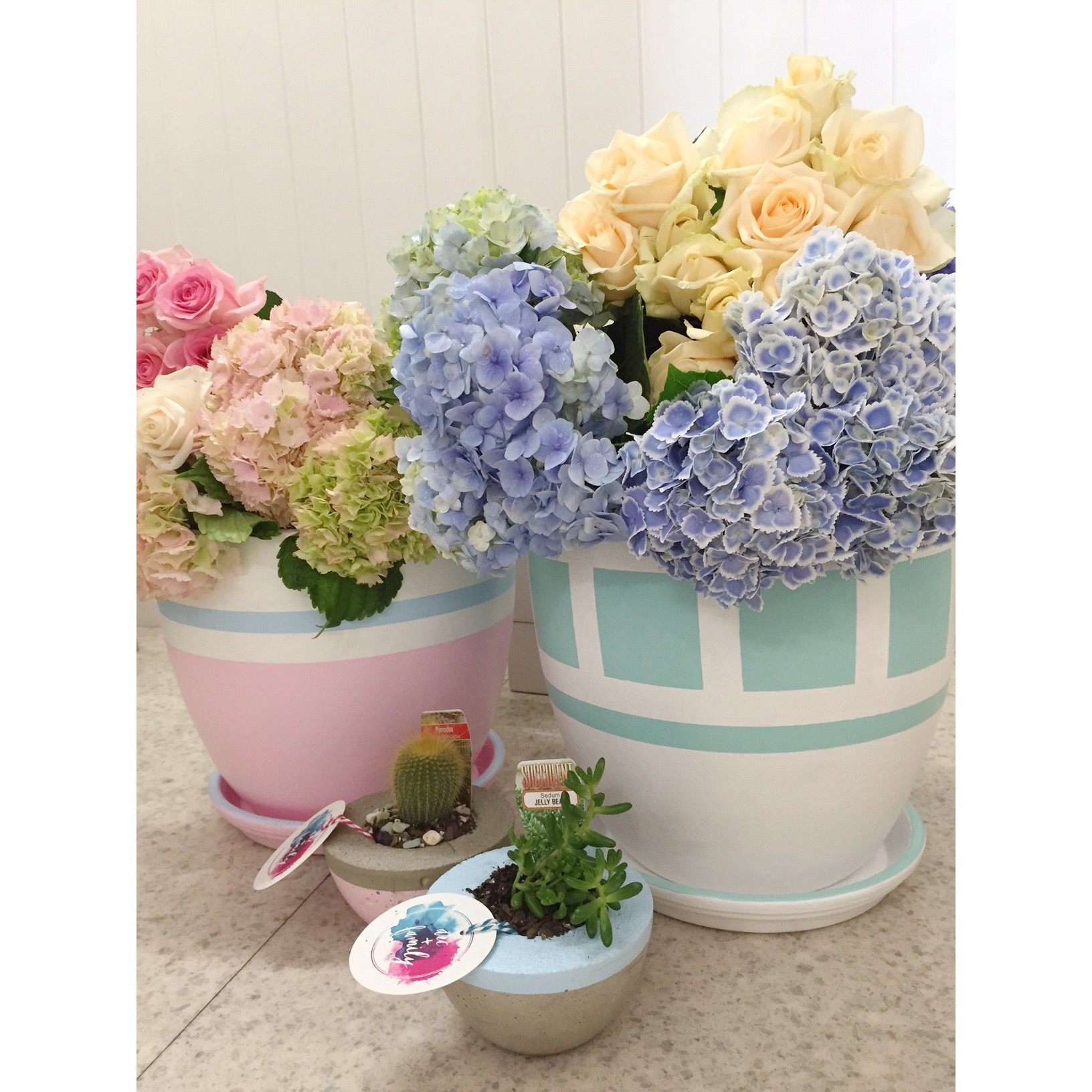 Concrete pots, Pink Venus and mint Square eyes with matching trays at stockist Alba Roses.jpg