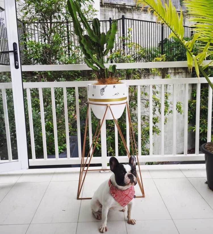 Lone Ranger wallpaper pot and Copper Zeus plant stand.jpg