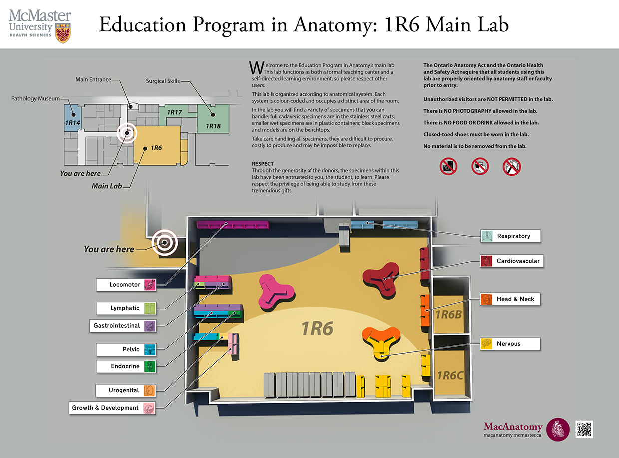 The Anatomy facilities at McMaster University are used by more than 2300 students per year and 10 different user groups. A decade ago students barely came through the door, now they study and do group work in the lab even if they're not working on anatomy. That's a win. This map was developed for the entrance to the lab, which is spread across several rooms. Each anatomical section was colour-coded and had a unique icon created specifically for it. In addition, scanning the QR code brought up a lab search function so that students looking for certain pathology specimens could easily locate them.