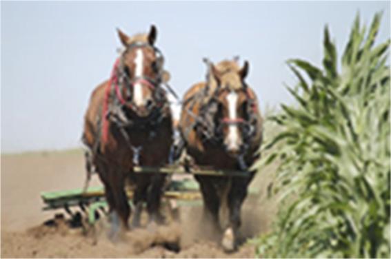 horsepower-thumbnail.jpg