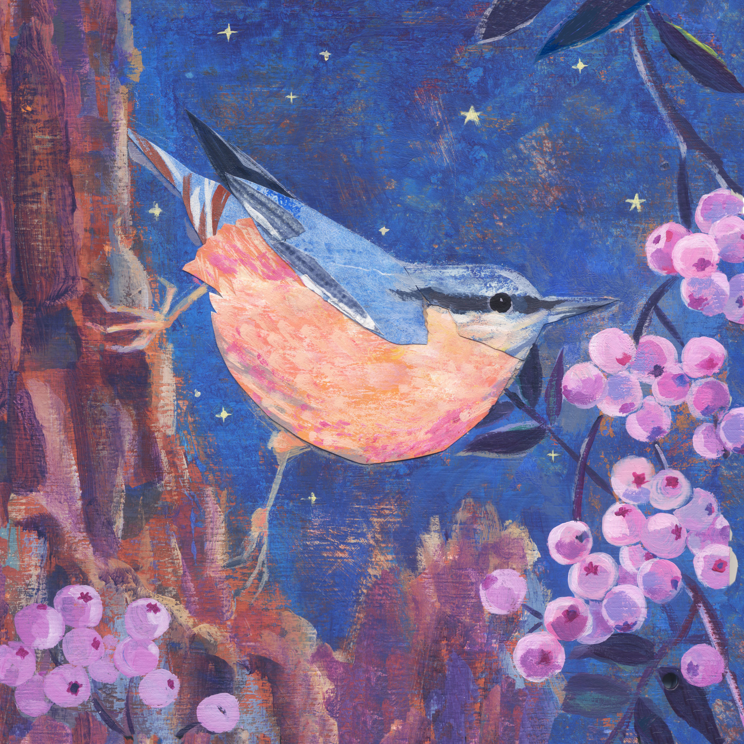 nuthatch-for-gabriellabuckingham.jpg