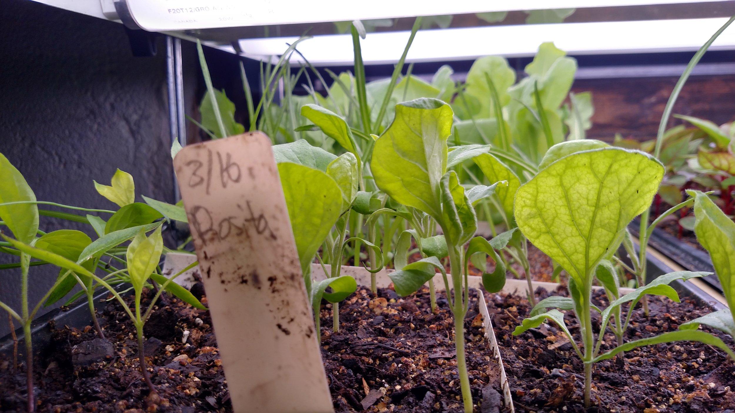 Ben's Peppers & Eggplant