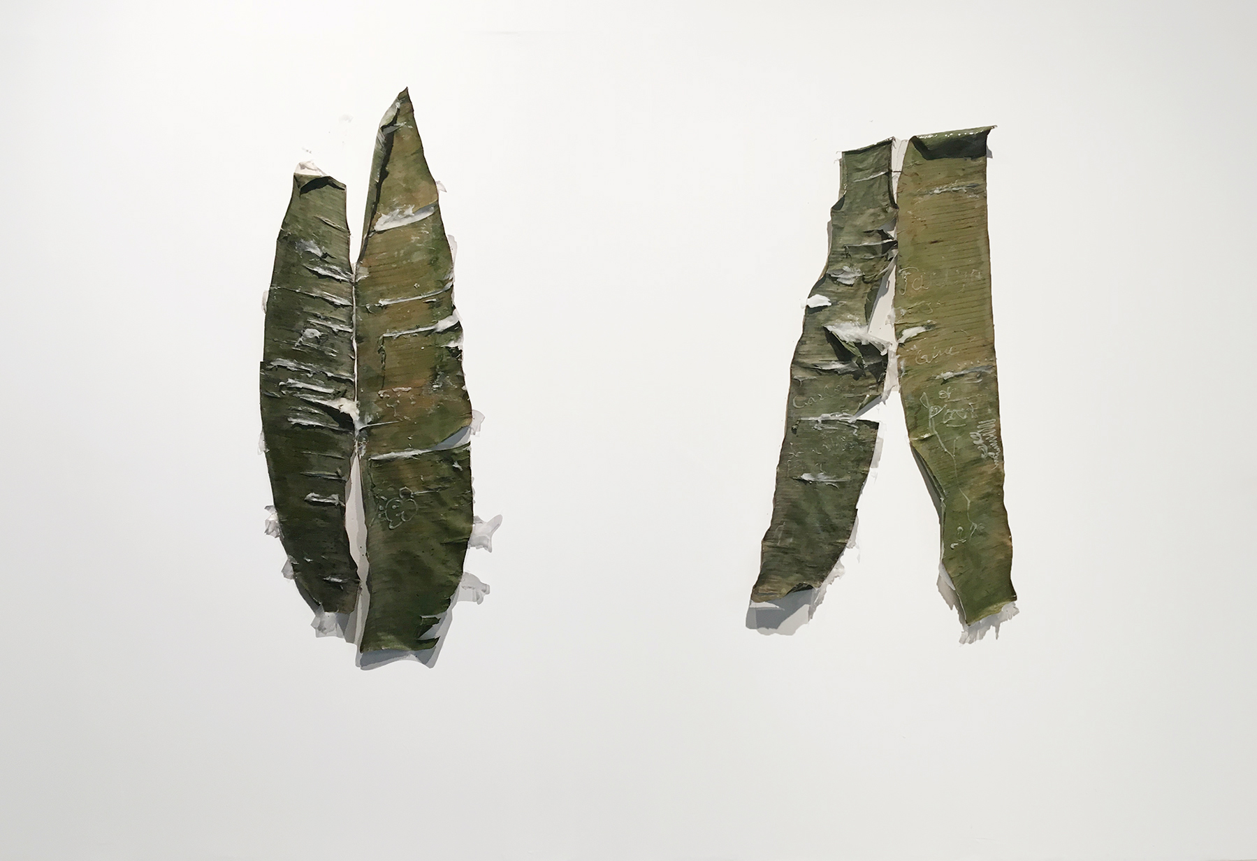 Untitled, Anthropometry Diptych (after Yves Klein)  viewers using plastic syringes containing petrolatum (Vicks VapoRub) on plantain leaves lined with resin  48 x 24 in.each  2018
