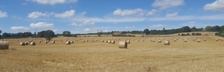 Field by Hardwater Crossing facing up towards Doddington.jpg