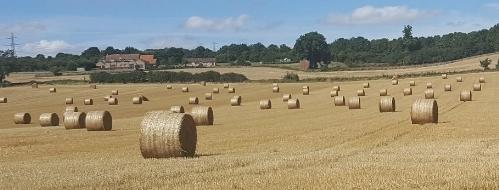 Field by Hardwater Crossing.jpg