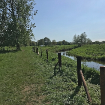 Fencing protects the river banks and channel