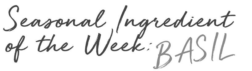 seasonal ingredient of the week basil.jpg