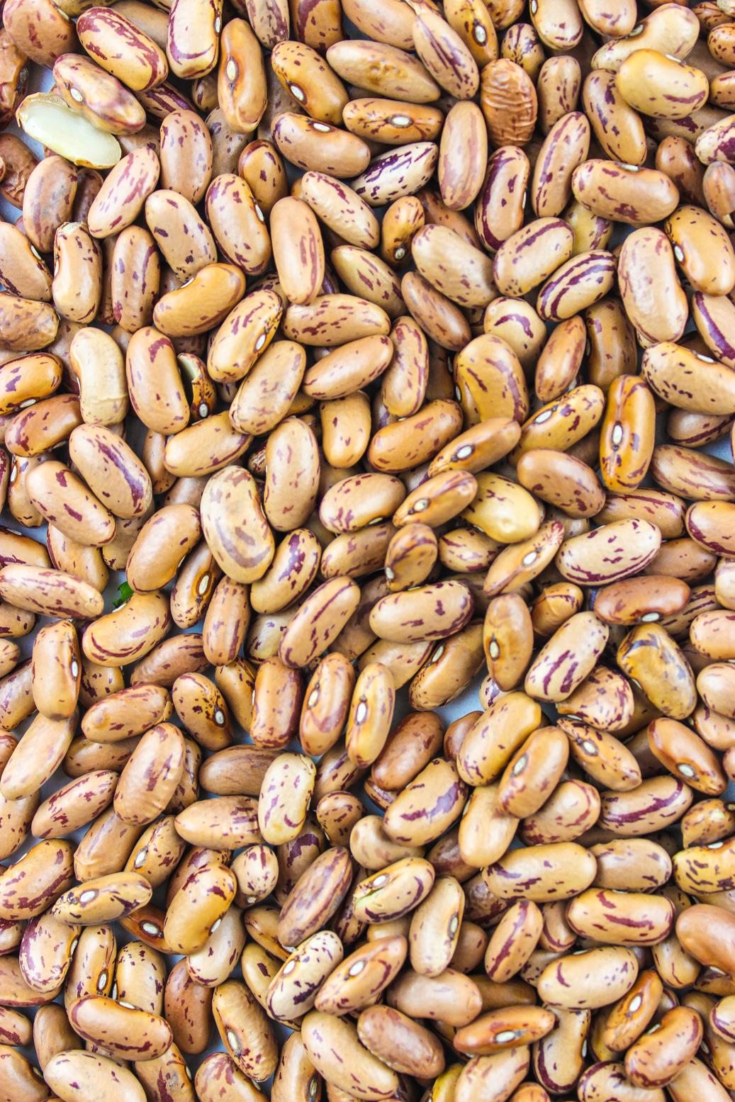 aduki beans-2.jpg