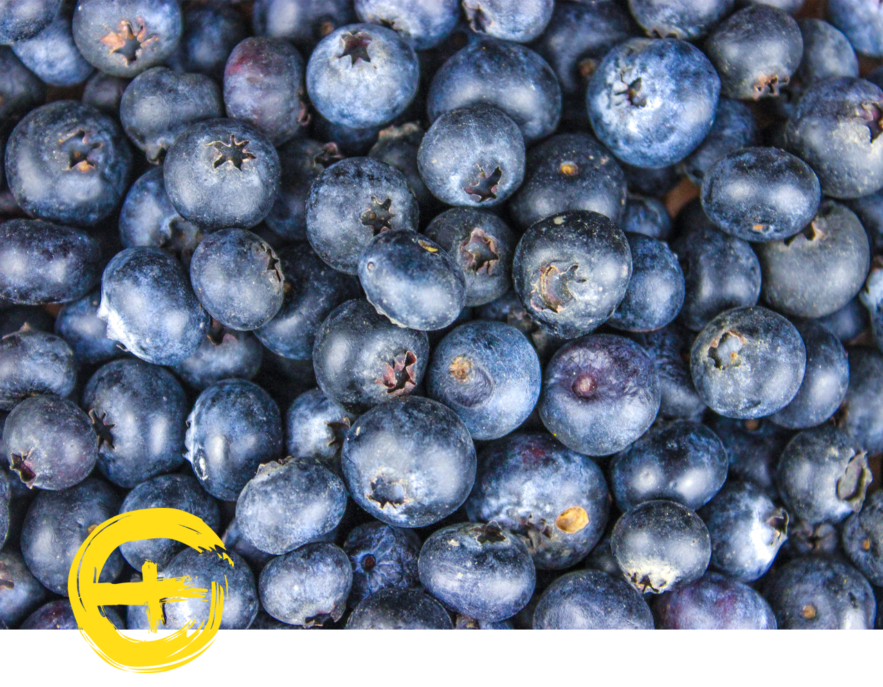 image seasonal ingredient blueberries.png