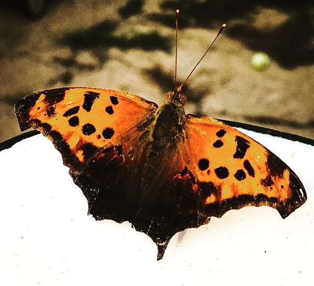 Sometimes a sign flies your way....like on my back porch. Makes me feel like things are right in the world! #butterfly #beautiful  #nature #signs