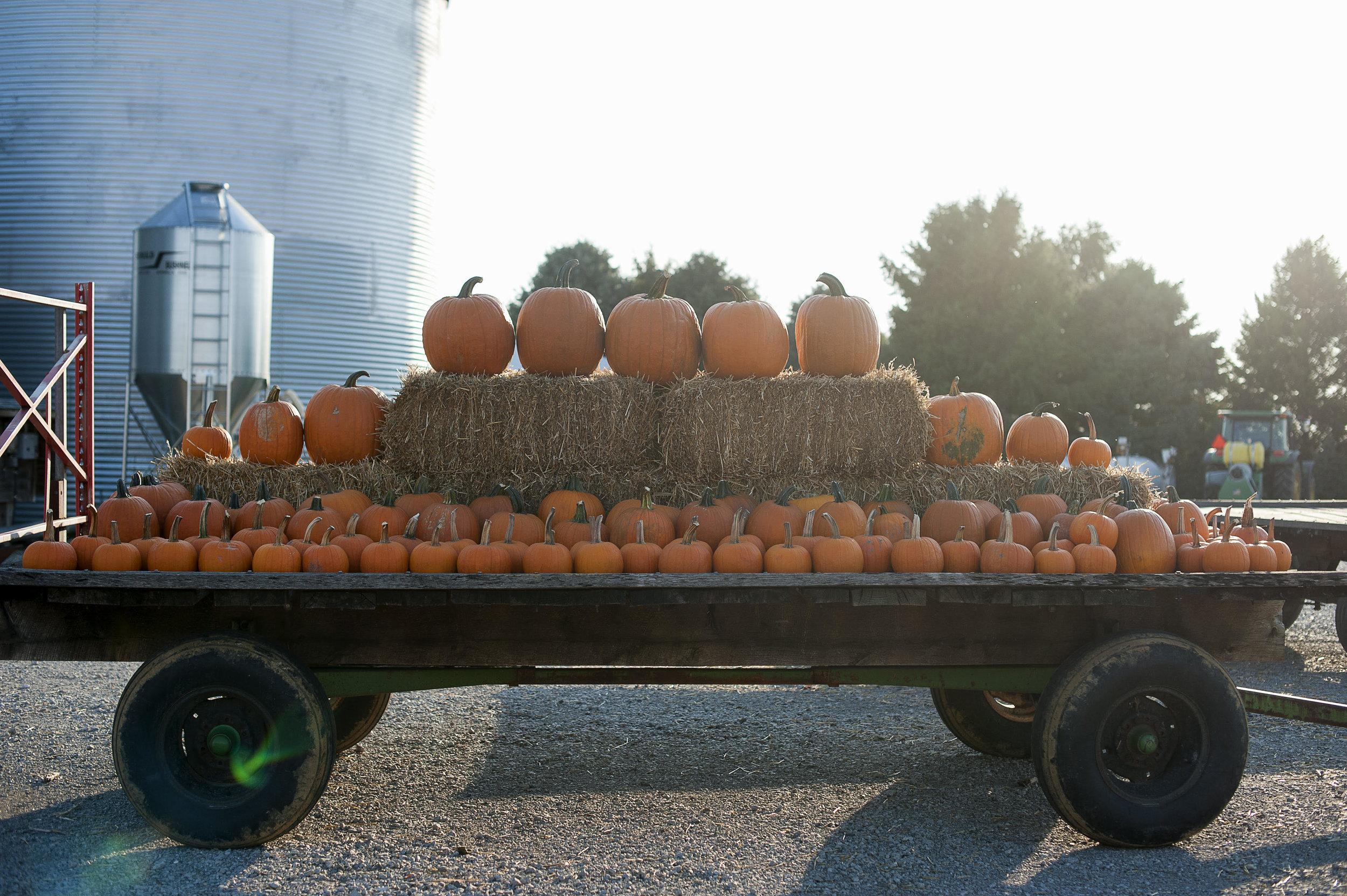 Pumpkin Patch.jpg