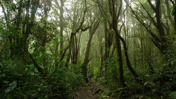 Braulio Carrillo National Park. © 2013, Maria Ogrzewalska.