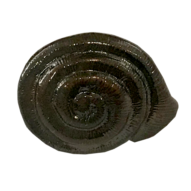 MS-9311-SNAIL 1X1 OIL RUBBED BRONZE.png