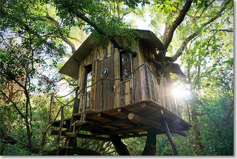 FOREST TREE HOUSE    - CA. 150 METER AWAY FROM MAIN BUILDING / THROUGH NATURE PATH   - THIS TREE HOUSE IS FOR COMPLETE NATURE LOVERS, SECLUDED AND VERY BASIC. (NO ELECTRICITY).  - DOUBLE BED  - THE ROOM IS VERY SMALL, THEREFORE  ONLY FOR SINGLE USE OR COUPLES MADLY IN LOVE :)   - DRY TOILET  - COMMUNAL INDOOR SHOWER / TOILET AVAILABLE IN MAIN BUILDING (150METER AWAY)  - BRING FLASHLIGHT FOR THE PATH :-)   PRICE: 800 EUR / PER PERSON