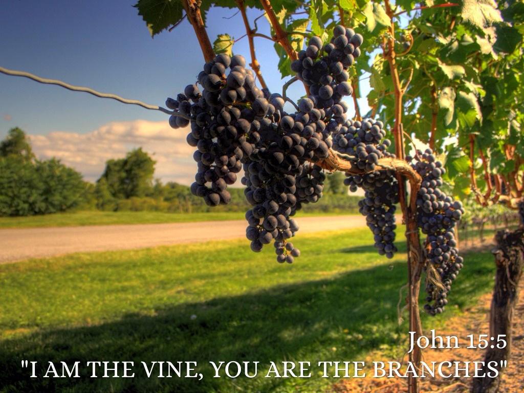 The True Vine Lutheran Church Of The Redeemer