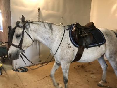 Much happier horse