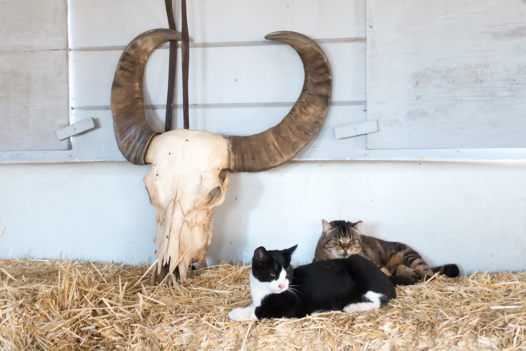 barn-cats.jpg