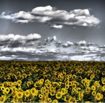 ...I took the image of the sunflowers and found a picture that also represents dreams.