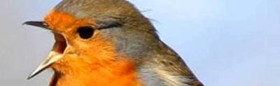 bird-singingthumbnail.jpg