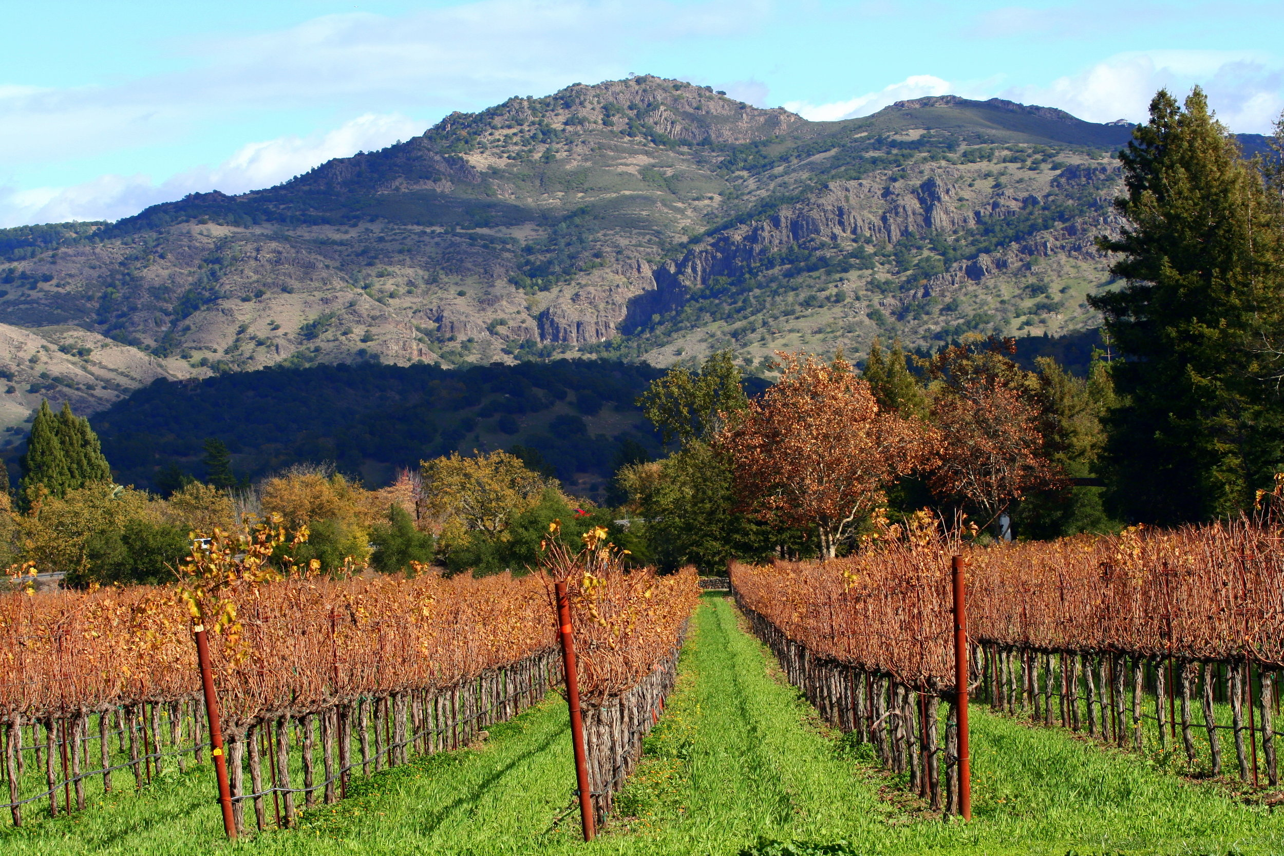 Autumn_in_Napa_Valley_vineyards.jpg
