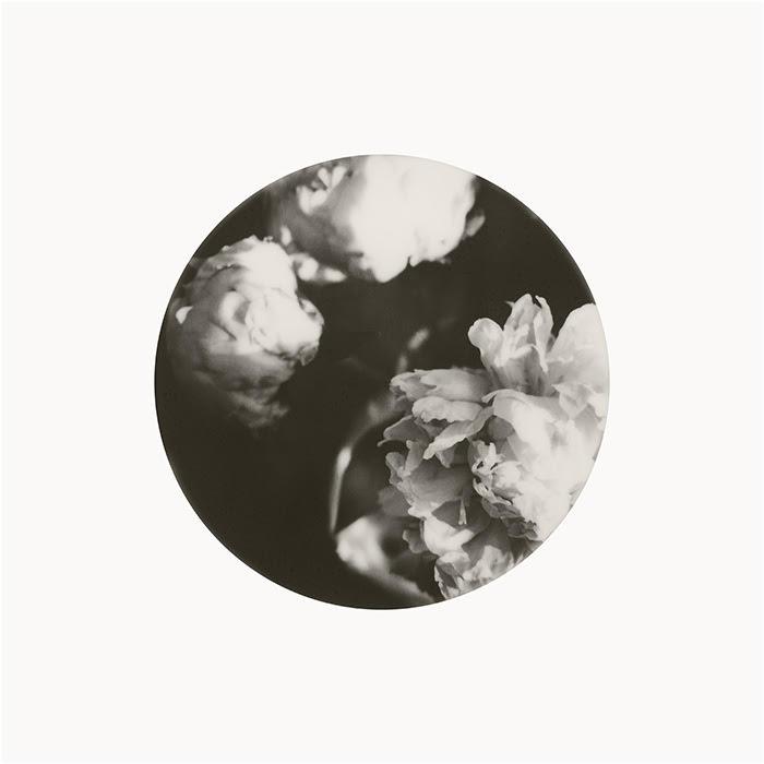 Peonies by Joann Edmonds