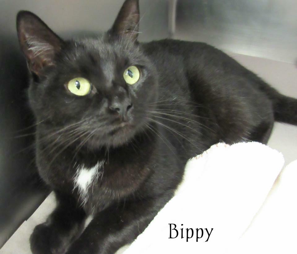 Bippy.JPG
