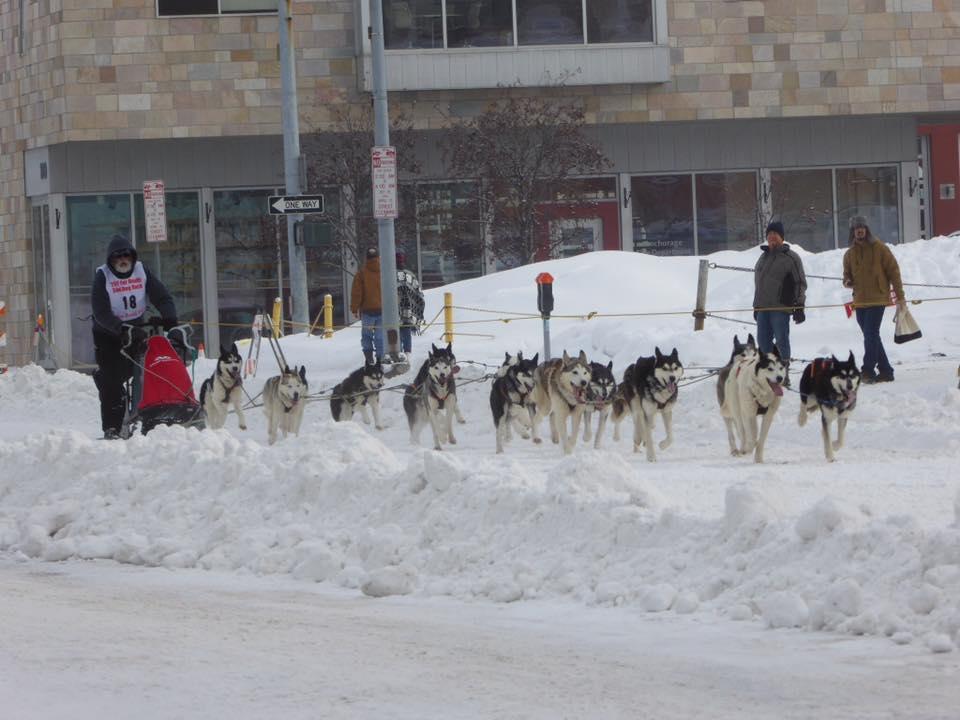 dogs racing 2.jpg