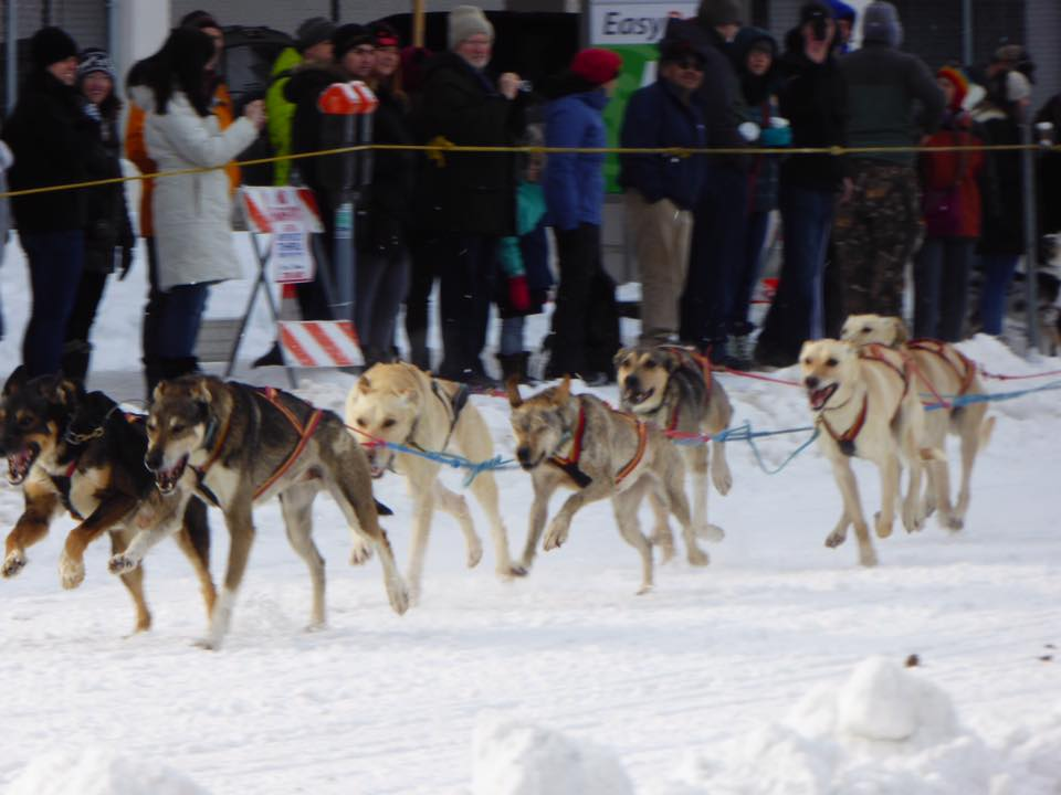 dogs racing closer up.jpg