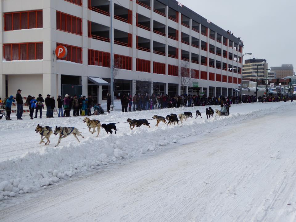 dogs racing.jpg
