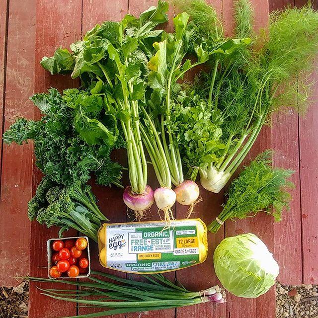 abundance. cilantro, dill, fennel, purple top turnips, green onions, cabbage, tomatoes, curly kale. #cobblestonefarm #fayettevillearkansas #bentonville #csa