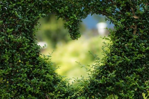 Tree heart.jpeg